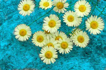 Hellgelbe Gänseblümchen von Corinne Welp