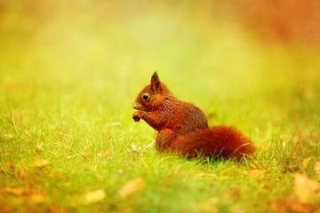 Eekhoorntje in het gras van LHJB Photography