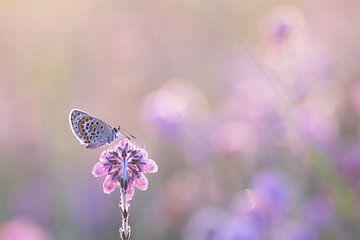 Heideblau von Vince Pellegrom