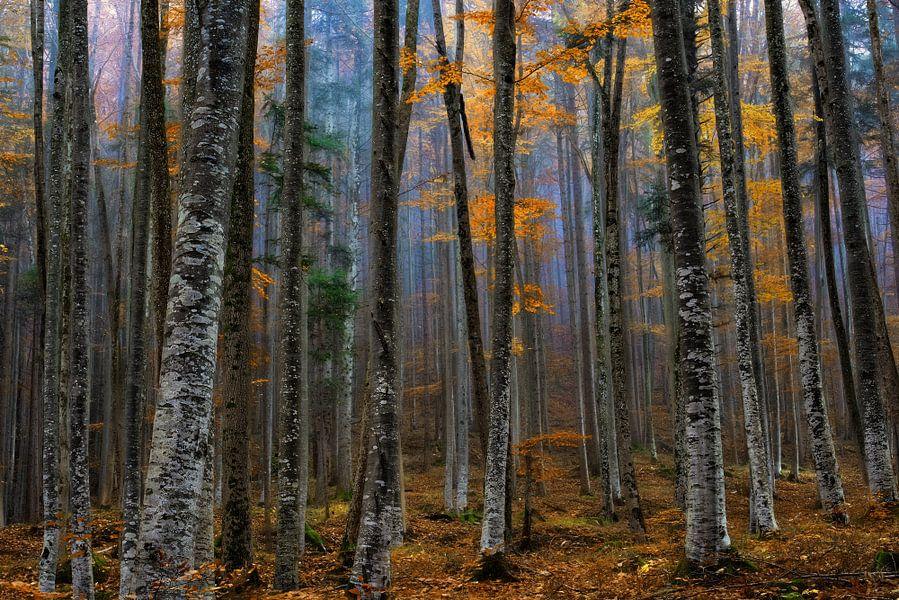 We zijn allen verschillend in hetzelfde bos