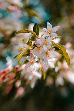 Bold Blossems van Hiske Boon