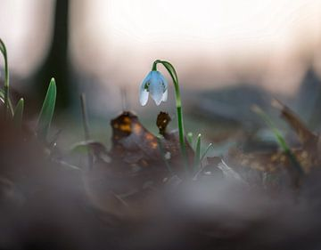 Blumen Teil 55 von Tania Perneel