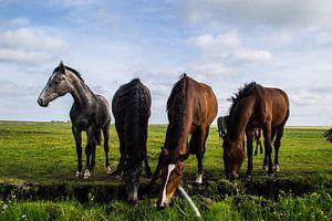 Groep Paarden in de Wei