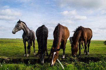 Groep Paarden in de Wei van Brian Morgan