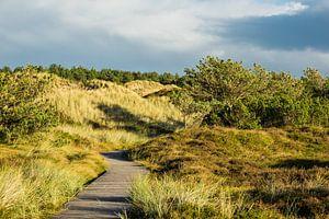 Landscape with dunes on the North Sea island Amrum van