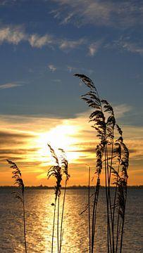 Morgenstimmung am Bodden von Ostsee Bilder