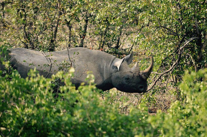 Black Rhino in the Bushes van Jonathan Rusch