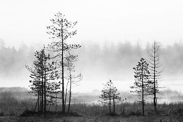 Kiefern im Taigawald von AGAMI Photo Agency