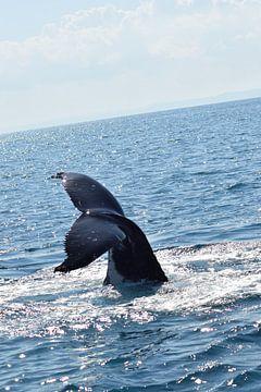 Staart speelse walvis boven water von Bianca Bianca