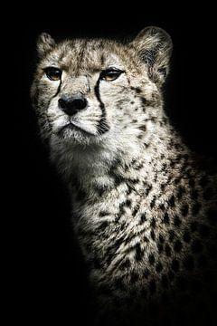 Cheetah portret / Cheetah portrait hard contrast von Elles Rijsdijk