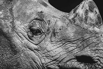 Portrait en noir et blanc d'un rhinocéros. sur GiPanini