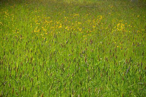 Een veld vol Graspluimen en Boterbloemen
