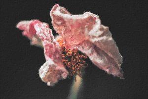 Rosa Blume digitale Malerei von Digitale Schilderijen