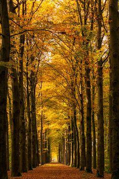 Natuurlijke kathedraal van bomen van Bram van Broekhoven