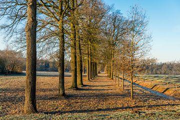 Nederlandse landschap met eikenbomen in rijen van Ruud Morijn