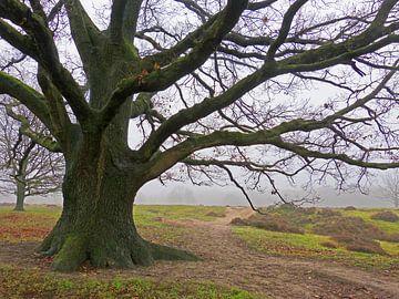 Old Oak (Oude grote Eik) van Caroline Lichthart
