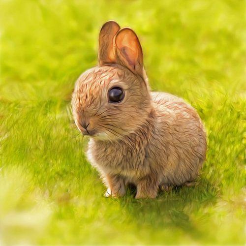 Baby Kaninchen von Silvio Schoisswohl