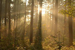 Een groep bomen in de herfst met zonnestralen