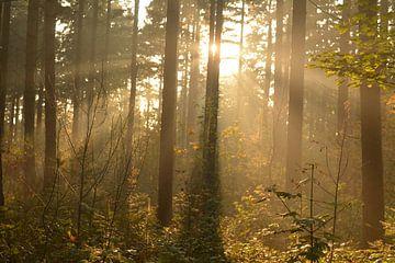Een groep bomen in de herfst met zonnestralen van Klaas Dozeman