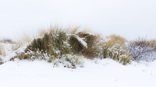 Sneeuw in de duinen van