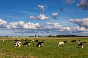 Koeien op een weiland in de buitenlucht van Bram van Broekhoven