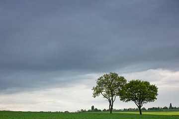 Twee bomen von Ulbe Spaans