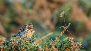 vogel en plantje van Frederik lembreght