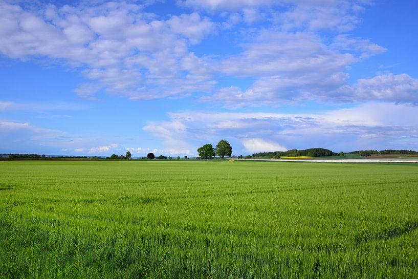 Groen graanveld van Ulrike Leone