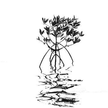 Mangrove van Johan Zwarthoed