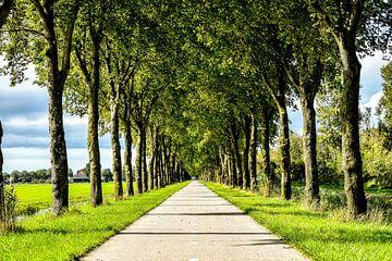 Fahrradweg von Frank van Eis