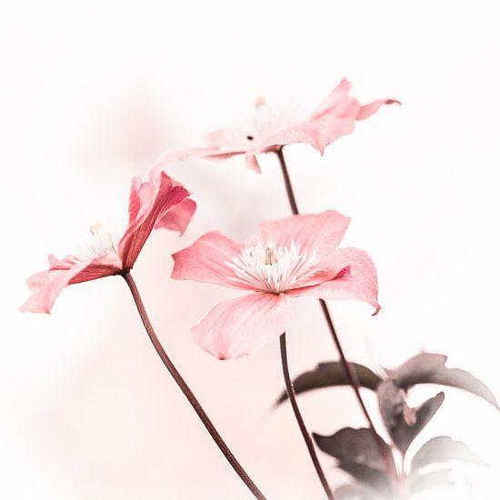 bloemtrio