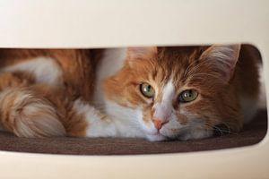 Kat op Stoel van
