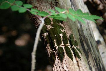 Schaduw in het bos 2 van Esther's Photos