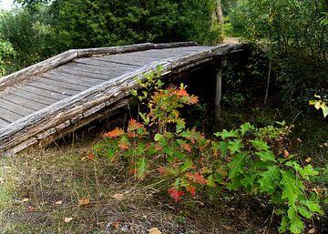 houten brug met herfstkleuren van joyce kool