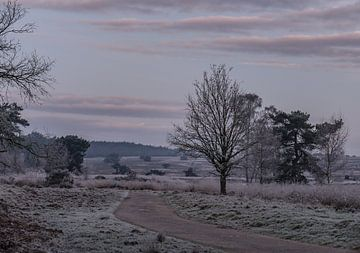 Wintermorgen in Roozendaal von Tania Perneel