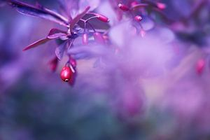 Sweet Berry..