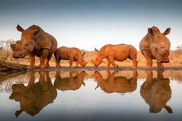 Deux bébés rhinocéros avec leurs mères à un point d'eau sur Peter van Dam