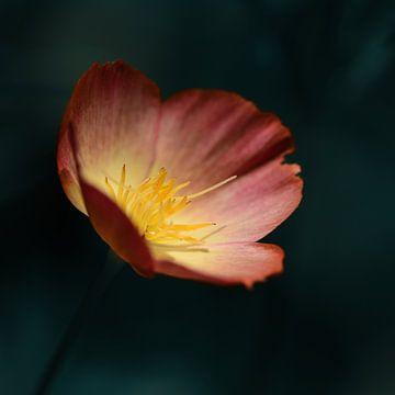 Blume von Saskia Schotanus