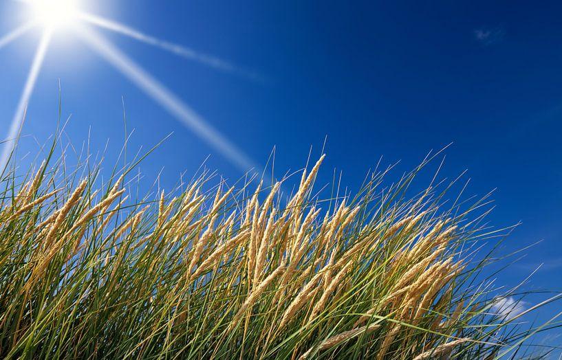 L'herbe des dunes sur BVpix