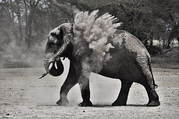 Elefant wirft Sand von Esther van der Linden