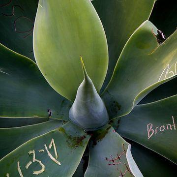 Pflanzenkunst von Angelique Faber