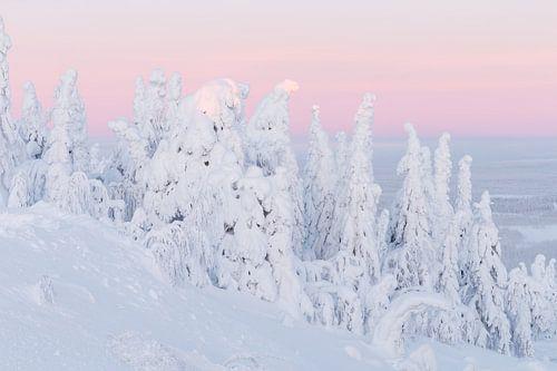Zonsopkomst in een winters landschap van