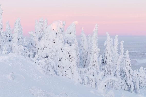 Zonsopkomst in een winters landschap van Menno Schaefer