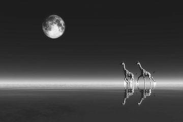Klimawandel - Giraffen von Jan Keteleer