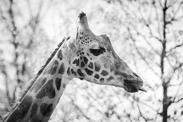 Brutale Giraffe in zwart-wit van Evelien Oerlemans