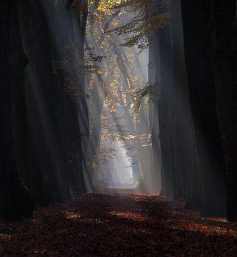 Sonnenstrahlen durch den Wald Hoekelumse [hochformat] (Ede, Niederlande) von Ben Nijenhuis
