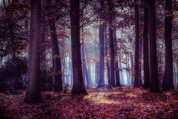 Birnenwald bei Sonnenaufgang. von Bruno Hermans