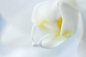 Witte Orchidee  von Margreet Frowijn