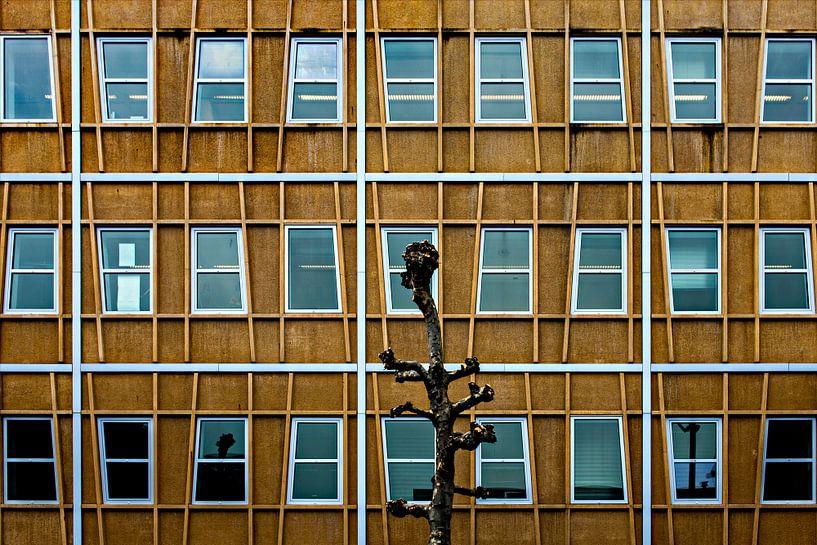 Gevel met boom van Maerten Prins