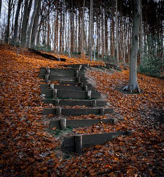 Houten trappen van Arash Mahdawi Nader